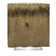 The Hawk 2 Shower Curtain by Ernie Echols