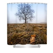 The Lone Oak Shower Curtain by Davorin Mance