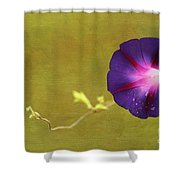 The Morning Glory Shower Curtain by Darren Fisher