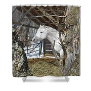 The Paso Fino Stallion At Home Shower Curtain by Patricia Keller