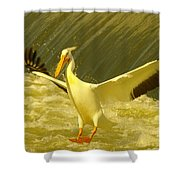 The Pelican Lands Shower Curtain by Jeff Swan