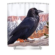 The Raven Shower Curtain by Rona Black