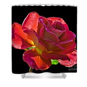 The Red One Shower Curtain by Robert Bales