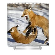 The Rivals Shower Curtain by Mircea Costina Photography