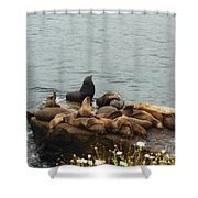The Sea Lion And His Harem Shower Curtain by Mary Machare