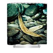 The Ship In The Harbour Shower Curtain by Hannes Cmarits