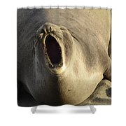 The Singing Seal Shower Curtain by Bob Christopher