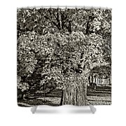 The Swinging Tree sepia Shower Curtain by Steve Harrington