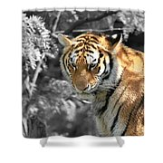 The Tiger Shower Curtain by Dan Sproul