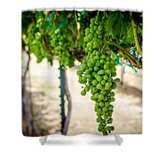 The Vineyard Shower Curtain by David Morefield