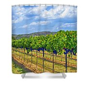 The Vineyard in Color Shower Curtain by Kristina Deane