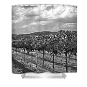 The Vineyard Shower Curtain by Kristina Deane