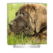 There Is Nothing Better Than A Bone And Some Warm Grass Shower Curtain by Jeff Swan