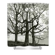 Three On A Hill Shower Curtain by Jack Zulli