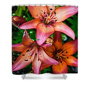 Three Pink Lilies Shower Curtain by Omaste Witkowski