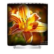 Tiger lily flower Shower Curtain by Elena Elisseeva