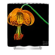 Tiger Lily Shower Curtain by Robert Bales
