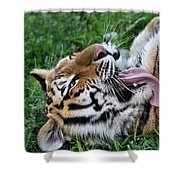 Tiger Tongue Shower Curtain by Dan Sproul