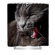 Time For A Nap Shower Curtain by Rona Black