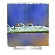 Tiny Waterworld And A Leaf Shower Curtain by Heiko Koehrer-Wagner