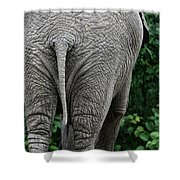 To The Rear March Shower Curtain by Karol  Livote