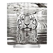 Top Cat Shower Curtain by Scott Pellegrin