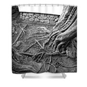 Tormented Trees Of Japan Shower Curtain by Daniel Hagerman
