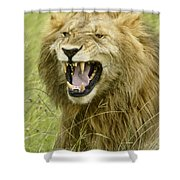Tough Guy Shower Curtain by Michele Burgess