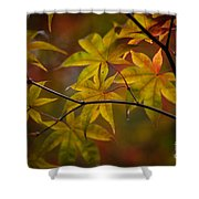 Tranquil Collage Shower Curtain by Mike Reid