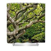 Tree #1 Shower Curtain by Stuart Litoff