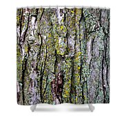 Tree Bark Detail Study Shower Curtain by Design Turnpike