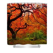 Tree Fire Shower Curtain by Darren  White