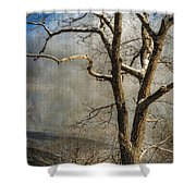 Tree In Winter Shower Curtain by Lois Bryan