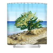 Tree On The Beach Shower Curtain by Veronica Minozzi
