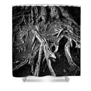 Tree Roots Black And White Shower Curtain by Matthias Hauser