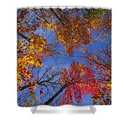 Treetops in fall forest Shower Curtain by Elena Elisseeva