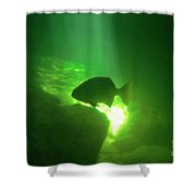 Tropical Fish Shilouette In A Cenote Shower Curtain by Halifax photography by John Malone