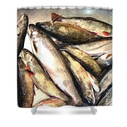 Trout Digital Painting Shower Curtain by Barbara Griffin