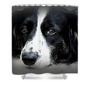 True Companion Shower Curtain by Melanie Lankford Photography