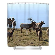 Tules Elks of Tomales Bay California - 7D21236 Shower Curtain by Wingsdomain Art and Photography