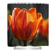 Tulip Prinses Irene Shower Curtain by Rona Black