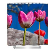 Tulip Revival Shower Curtain by Chad Dutson