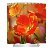 Tulips Shower Curtain by Kathleen Struckle