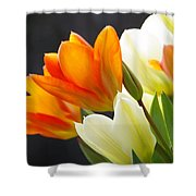 Tulips Shower Curtain by Marilyn Wilson