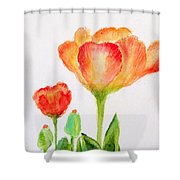 Tulips Orange And Red Shower Curtain by Ashleigh Dyan Bayer