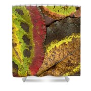 Turning Leaves 2 Shower Curtain by Stephen Anderson