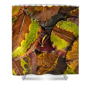 Turning Leaves 4 Shower Curtain by Stephen Anderson