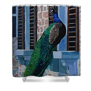 Tuscan Mascot Shower Curtain by Lynne Reichhart
