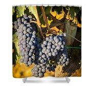 Tuscan Vineyard Shower Curtain by Brian Jannsen