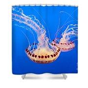 Twin Dancers - Large Colorful Jellyfish Atlantic Sea Nettle Chrysaora Quinquecirrha  Shower Curtain by Jamie Pham